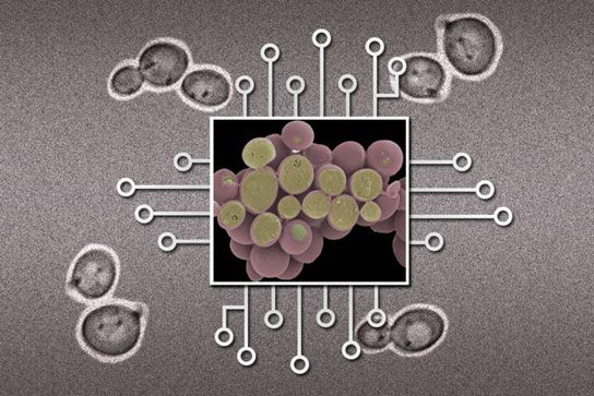 New Biotech Device Could Make Large Biological Circuits Practical