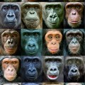 New DNA Study Reveals Clues about Factors That Shaped Primate Evolution