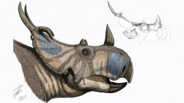 New Dinosaur Species Announced Spinops Sternbergorum