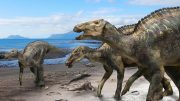 New Dinosaur Species Kamuysaurus Japonicus