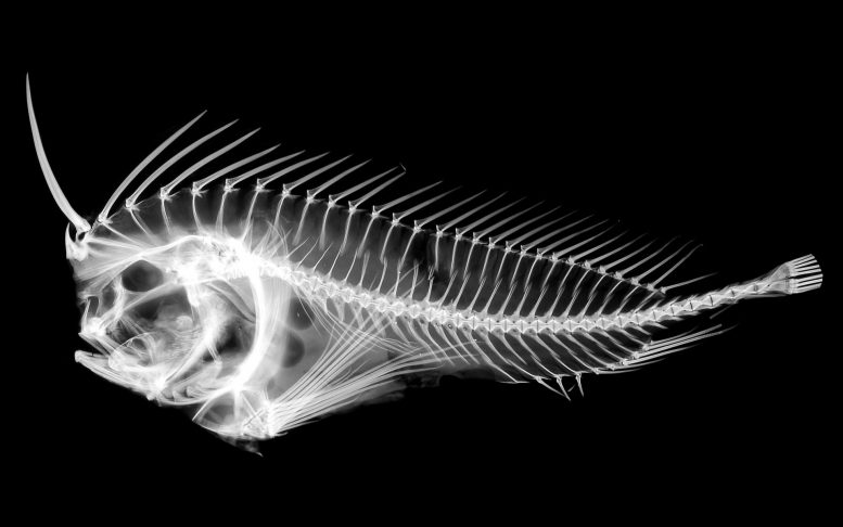 New Discovery Redraws Family Tree of Stonefishes