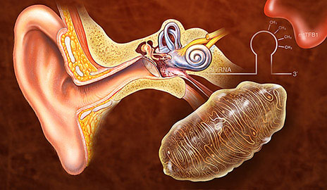 New Genetic Modification May Prevent Hearing Loss