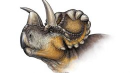 New Horned Dinosaur Species Wendiceratops Discovered