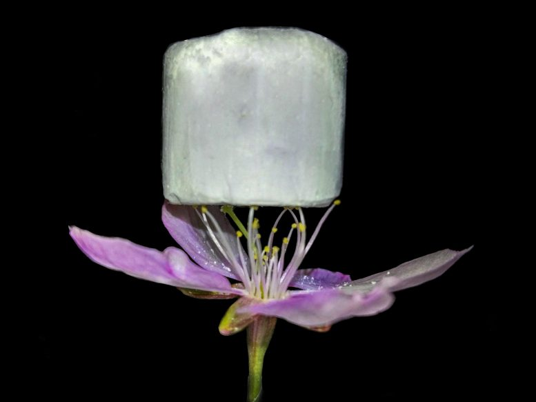 A Sample of the New Material Resting on a Flower