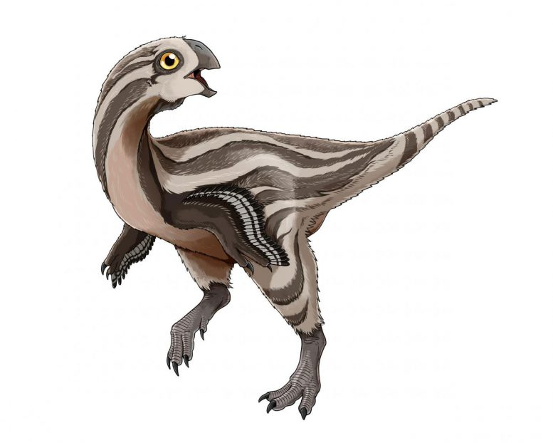 New Oviraptorosaur Species Discovered