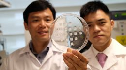 New Patch Turns Energy-Storing Fats Into Energy-Burning Fats