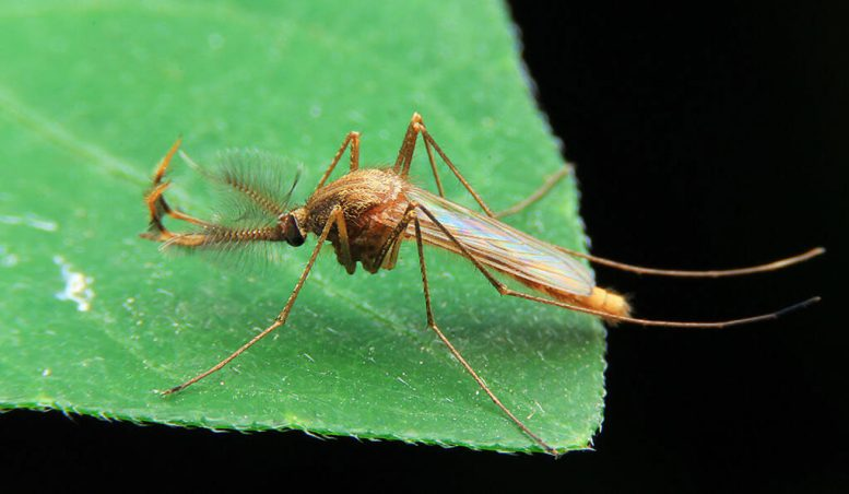 New RNA-Based Therapy to Target West Nile Virus