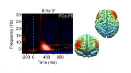 New Research Could Lead to Tools to Enhance Brain Function