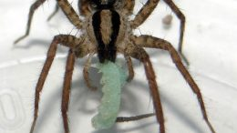 New Research Shows Fear of Spiders and Snakes is Deeply Embedded in Humans