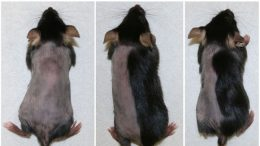 New Research Shows That Blocking Enzymes in Hair Follicles Promotes Hair Growth