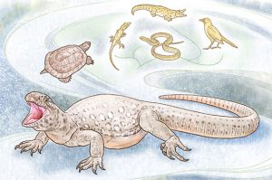 New Research Shows Turtles Share a Recent Common Ancestor with Birds and Crocodiles