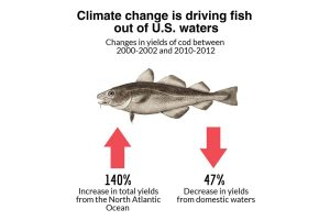 New Research Tracks Mercury Sources in Fish