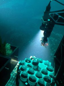 New Soft Coral Species Discovered in Panama