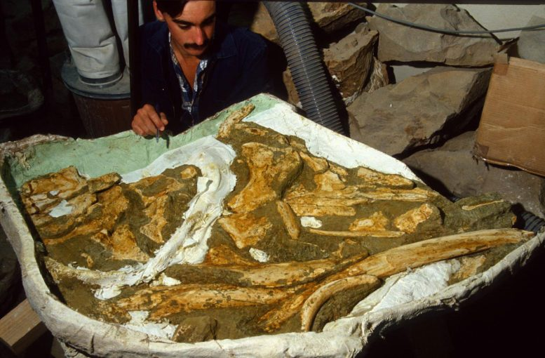 New Species of Ancient Whale Identified