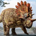 New Species of Horned Dinosaur