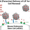 New Strategy Advances Stem Cell Culture Techniques
