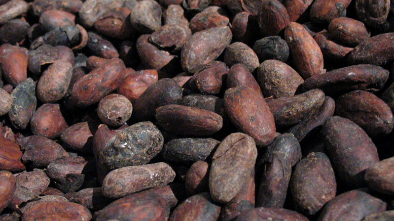 New Study Looks at Cocoa for Pleasure and Health