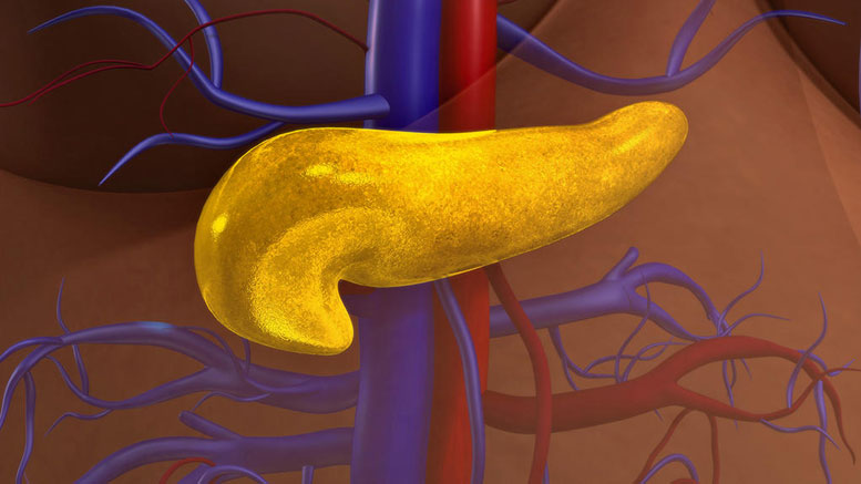 New Study Pinpoints PON2 Role in Pancreatic Cancer