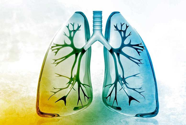 New Study Shows Thyroid Hormone Therapy Heals Lung Fibrosis