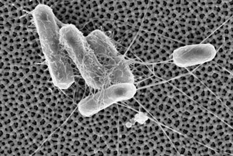 New Tech Keeps Bacteria from Sticking to Surfaces