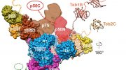 New Telomerase Research Could Lead to New Strategies for Treating Disease