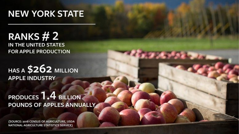 New York State Apples Infographic