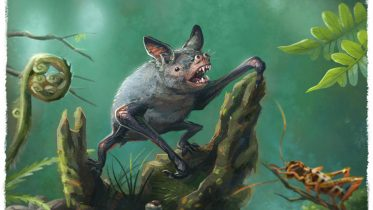 Scientists Discover Fossils of a Giant Extinct Burrowing Bat in New Zealand