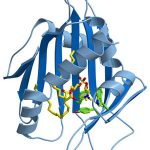 Newly Discovered Small Molecule Boosts Insulin Signaling