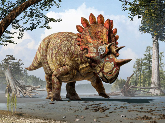 Newly Discovered Species of Horned Dinosaur