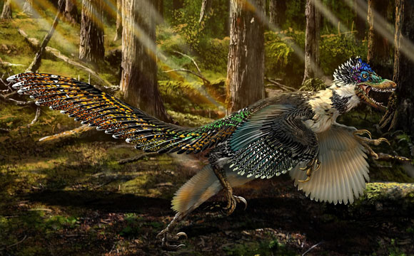 Newly Dsicovered Zhenyuanlong Suni Winged Dinosaur