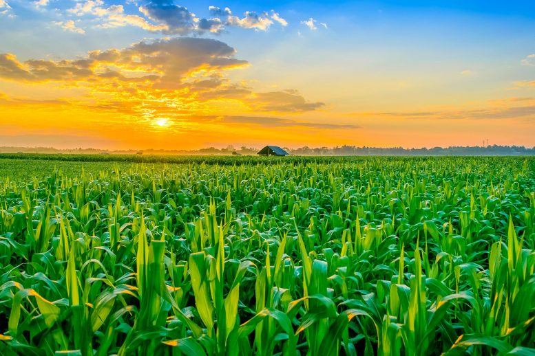 Nitrate Sensor Can Optimize Agricultural Productivity