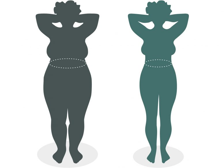 Lipoic Acid Supplements Help Overweight People Lose Weight In Clinical Trial