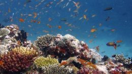 Oceanic Coral Reefs