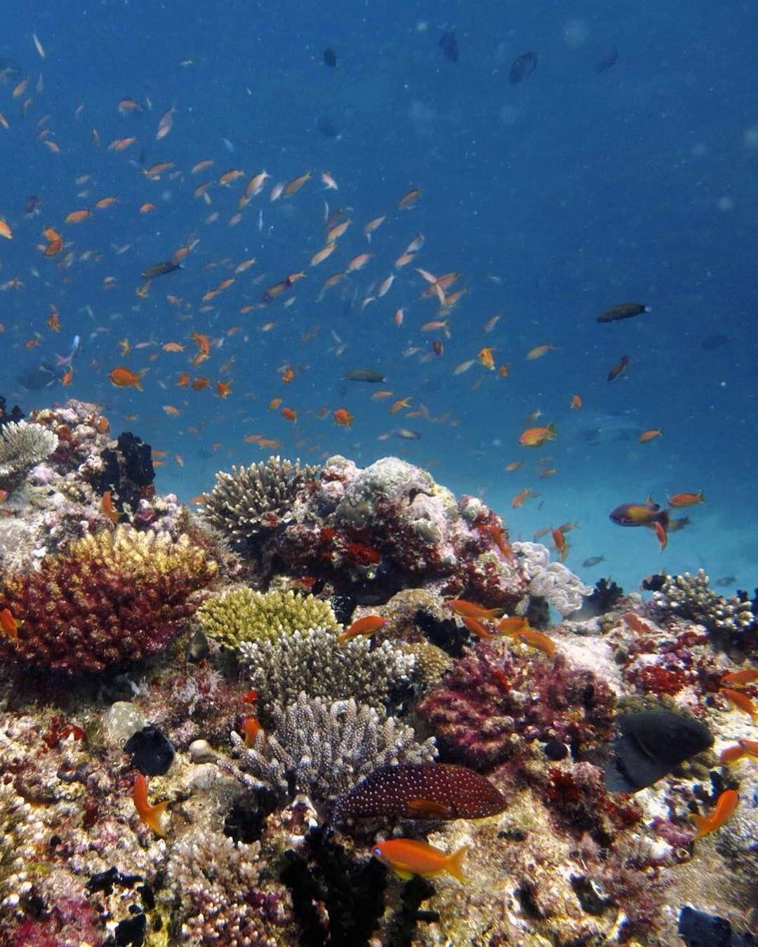Abundance of Life on Coral Reefs Has Been Puzzling Since Charles Darwin's Day – New Research Provides Answers