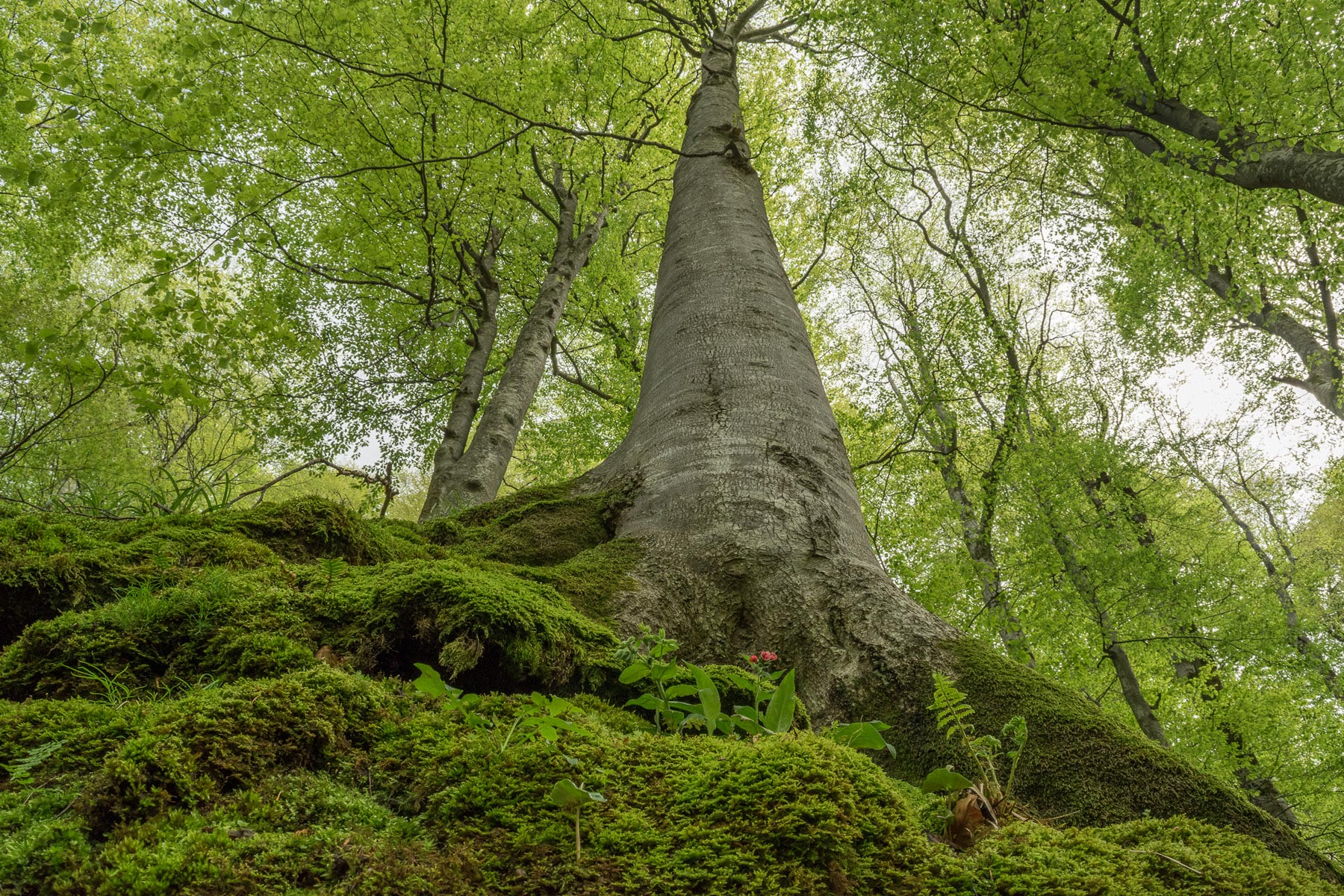 """Preserving Outstanding Ecological Value: Assessment of the Protection State  of Mostly """"Untouched"""" Forests in Europe"""