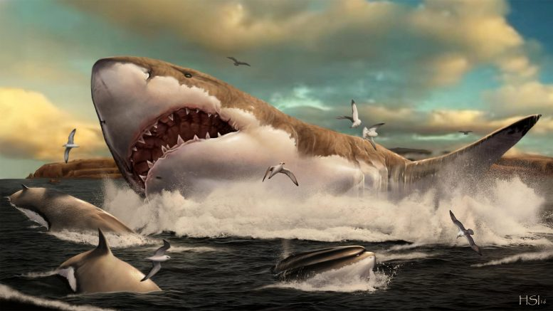 Otodus Megalodon Preying on Whale Cethoterium
