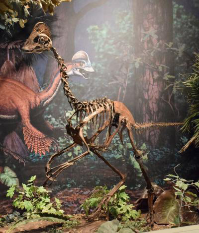 Paleontologists Announce the Discovery of Bird-Like Dinosaur Anzu Wyliei