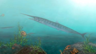 Paleontologists Discover Never-Before-Seen Ancient Fish Species