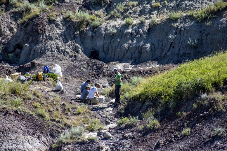 Paleontologists Fieldwork