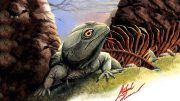 Paleontologists Identify a New Species of Prehistoric Reptile Colobops Noviportensis