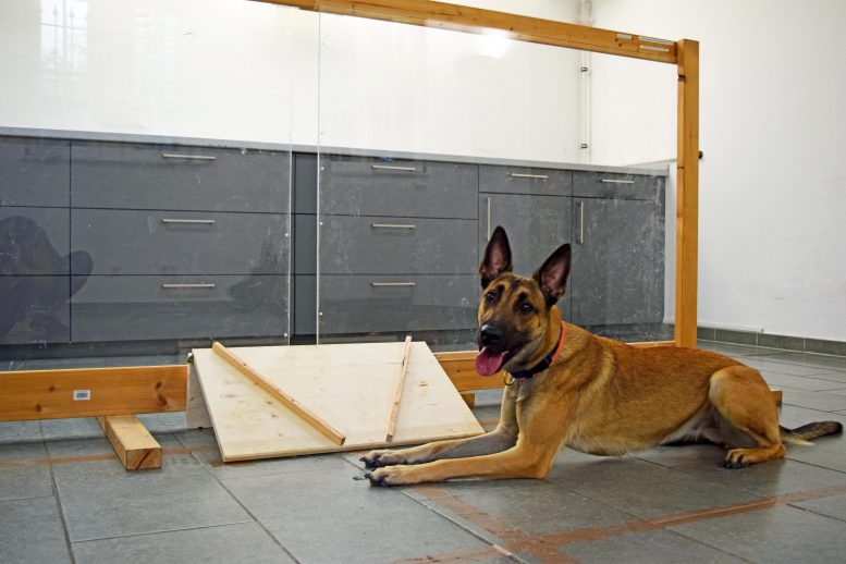 Partition Separates Dogs and Experimenter