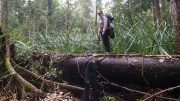 Peat Swamp Forest in Borneo