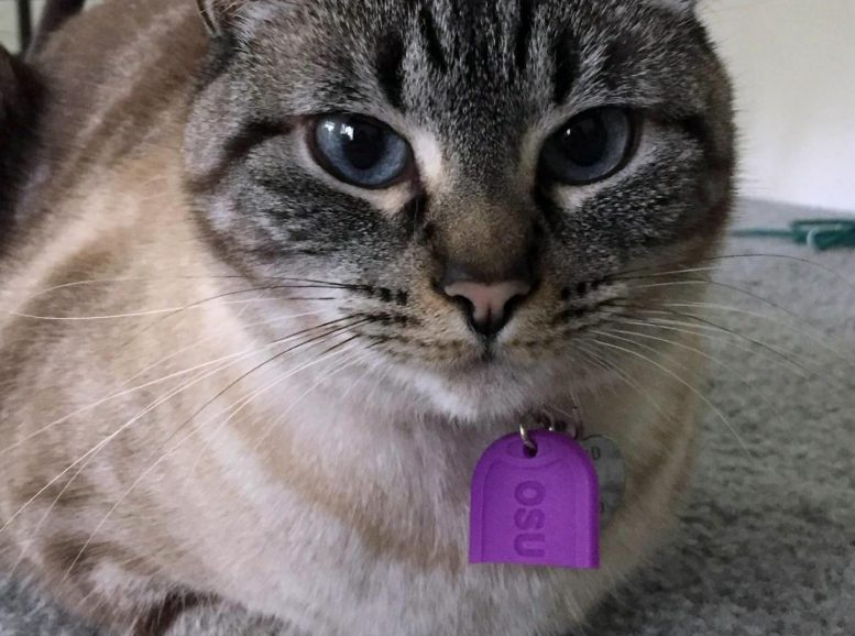 Pet Tags Link Widely Used Flame Retardant to Hyperthyroidism in Cats