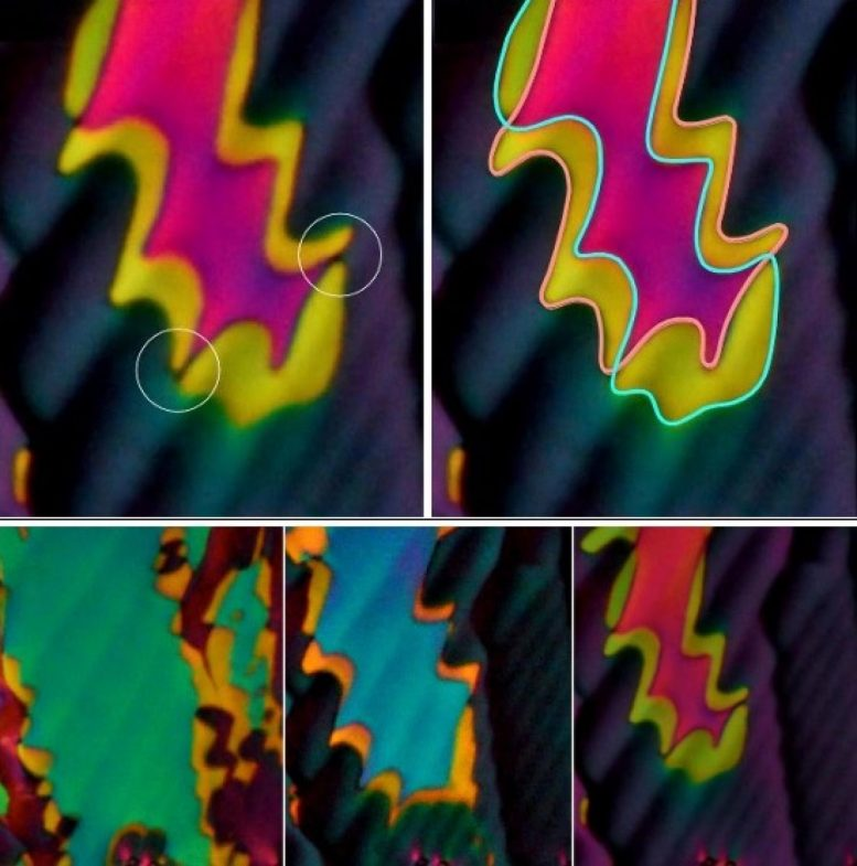 Phase of Liquid Crystal Wild Colors