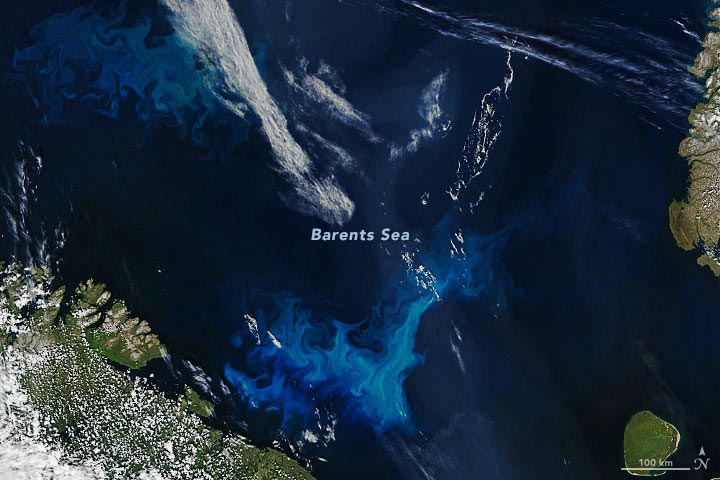 Phytoplankton Barents Sea Annotated