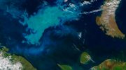 Phytoplankton Bloom Barents Sea