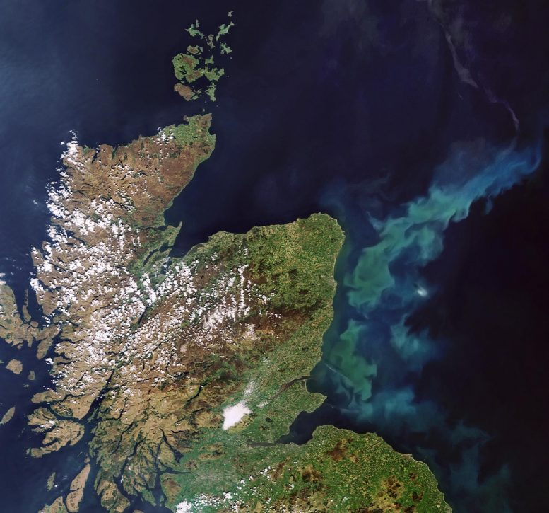 Phytoplankton Bloom Scotland