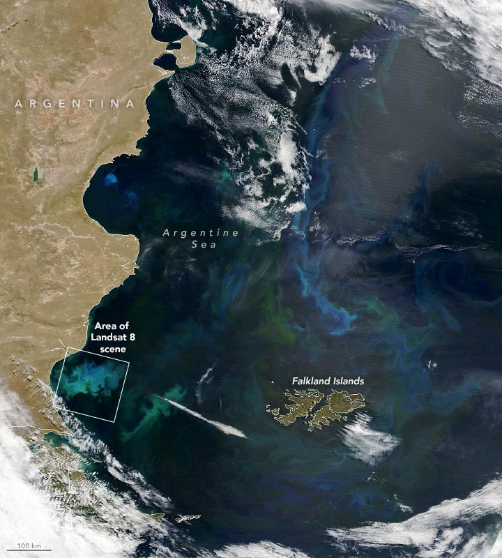 Phytoplankton Factory Argentine Sea Annotated