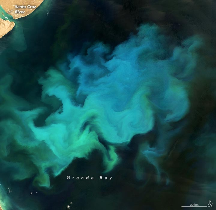 Phytoplankton Grande Bay Annotated