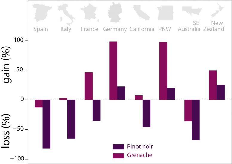 Pinot Noir and Grenache Gains and Losses